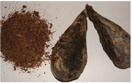 Свойства и применение бобровой струи